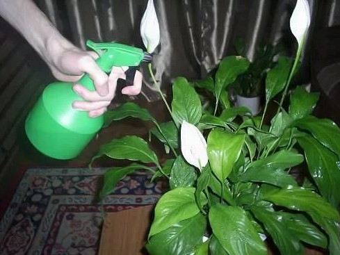 Как флорист с опытом, выделю 7 главных секретов для активного роста и цветения домашних растений!