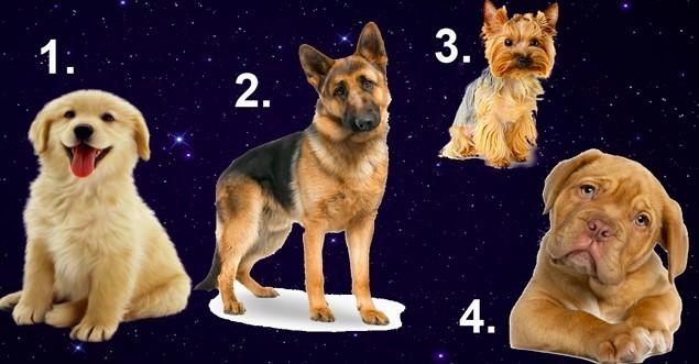 Выберите собачку, что бы узнать какой мужчина для вас идеален в год Желтой Собаки