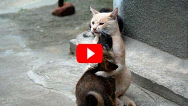 Пес пропал на 10 дней. Когда появился, на пороге встречала кошка. Как она скучала!
