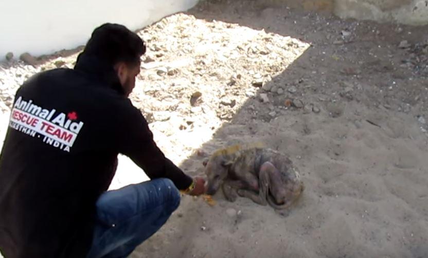 Эта больная собака не могла встать на ноги и она заплакала, когда спасатели взяли ее на руки!