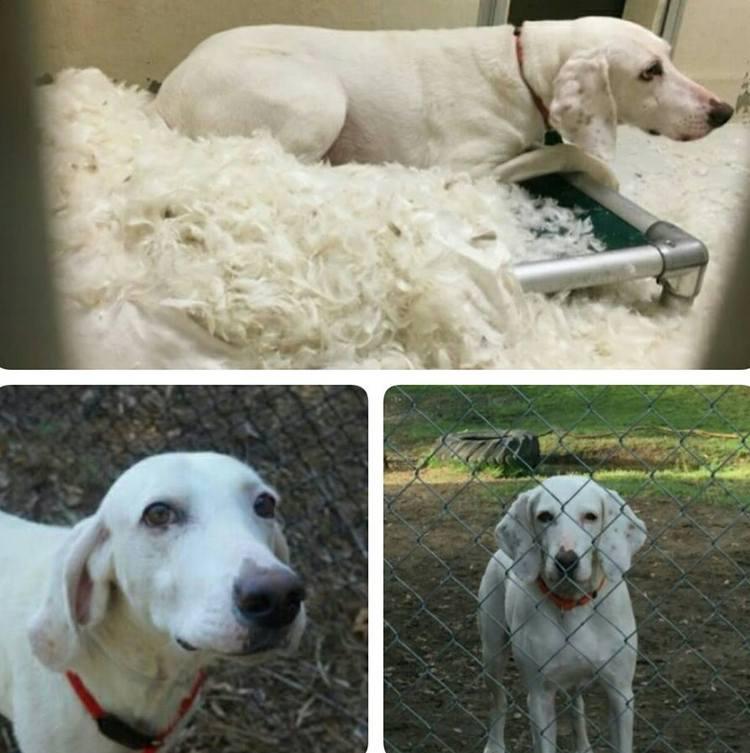 Эта собака 11 раз возвращалась обратно в приют, пока его работники наконец не осознали причину