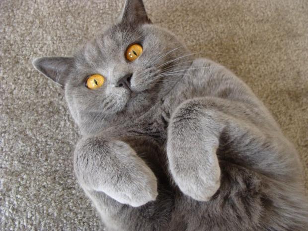 Самые удивительные факты о котах: чего мы не знаем о ласковых домашних питомцах