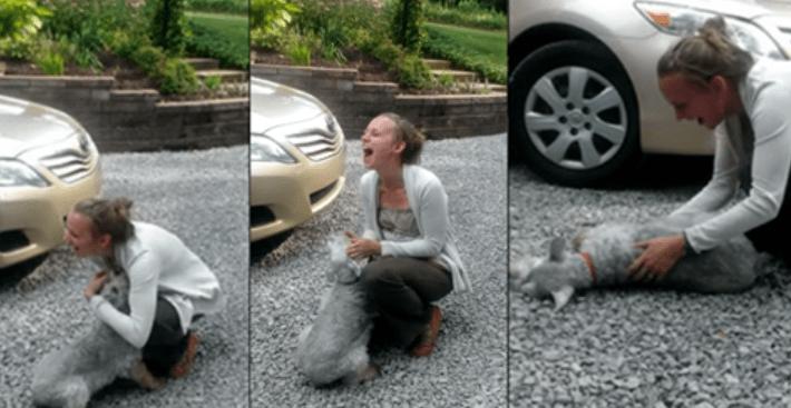 Она ждала свою хозяйку два года, а увидев ее — упала в обморок!