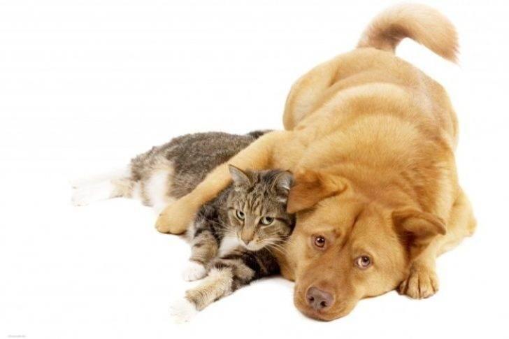 Когда кот решил прокормить всю нашу семью: меня, себя и пса Бакса… Спасибо. От души насмеялась!