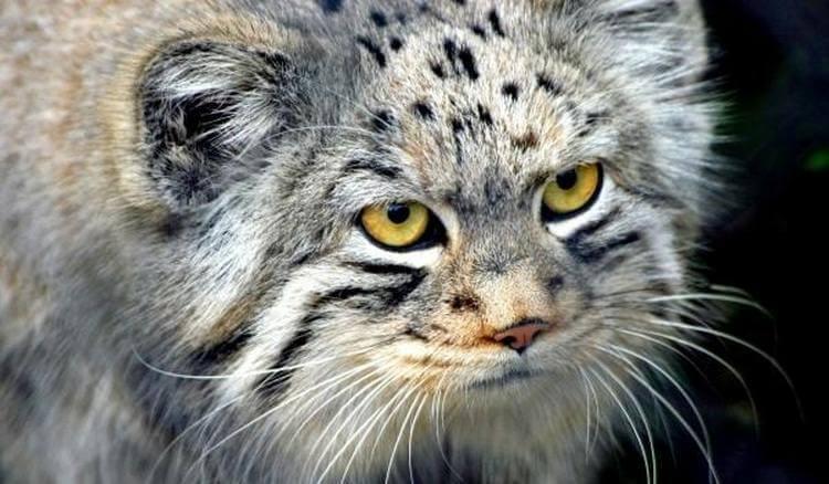 Старушка и представить не могла, какого кота она подобрала на улице!