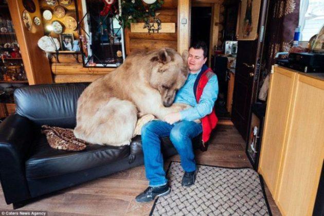 Уже 20 лет медведь живёт в обычной семье. Как же он до сих пор не разорвал своих хозяев?