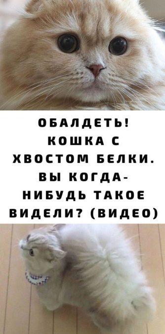Обалдеть! Кошка с хвостом белки. Вы когда-нибудь такое видели? (видео)