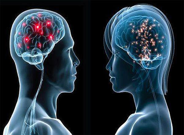 Мужской и женский мозг — в чем разница? Гениальное пояснение, читаем и восхищаемся...
