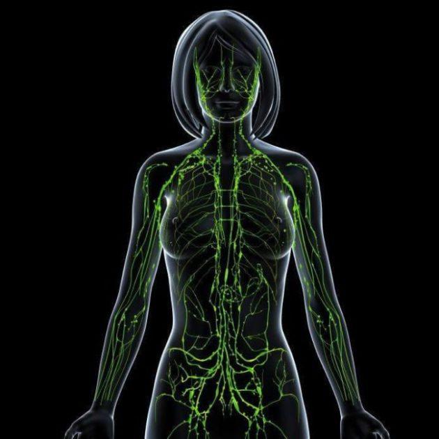 Эти советы по очищению лимфатической системы мне реально помогли… Ушла слабость, синусит, головные боли и даже лишний вес!