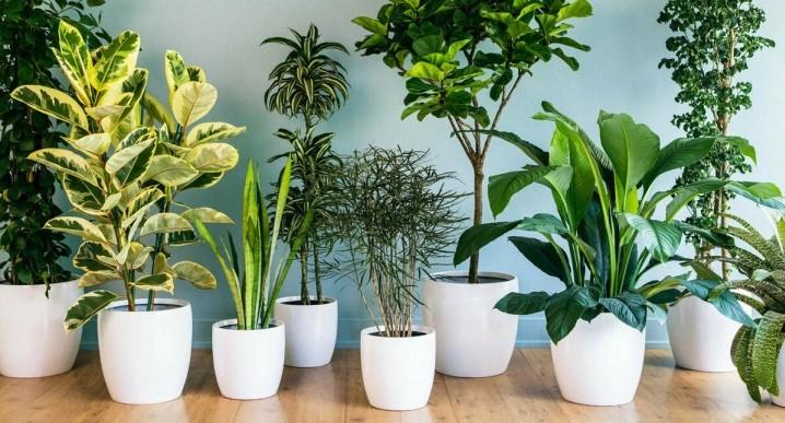 Важнейшие рекомендации от опытных флористов для ваших комнатных растений
