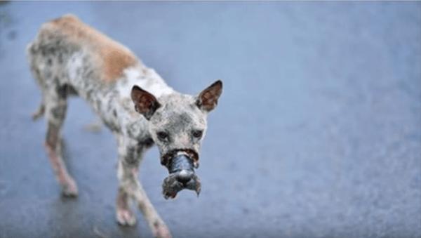Пес переживший настоящие пытки, не перестал верить людям