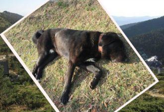Он нашёл в горах безжизненного пса с телефоном на ошейнике! Позвонив по номеру, парень и представить не мог, что будет дальше…