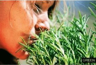 Самая мощная трава для мозгового кровообращения, сердца, сосудов, надпочечников, суставов, кожи, волос и не только! — green medic