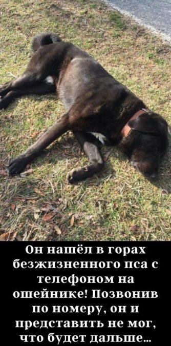 Он нашёл в горах безжизненного пса с телефоном на ошейнике! Позвонив по номеру, он и представить не мог, что будет дальше…
