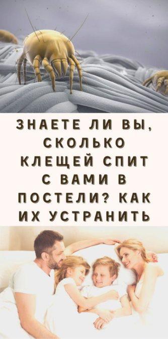 Знаете ли вы, сколько клещей спит с вами в постели? Как их устранить