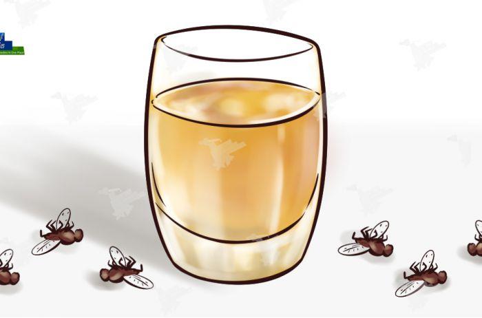 Как с помощью простого домашнего средства забыть о мухах, комарах и тараканах в доме уже через 2 часа