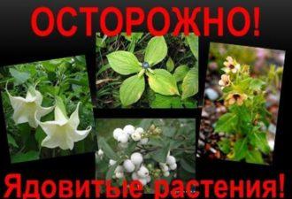 10 растений, которые ни в коем случае нельзя срывать