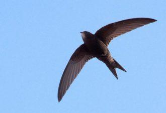 Какая птица является символом месяца рождения человека и что это значит