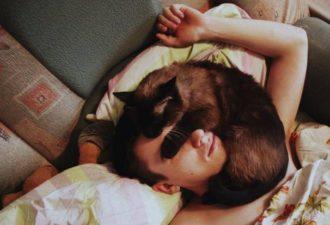 Почему кошки любят спать на хозяевах: несколько причин такого поведения