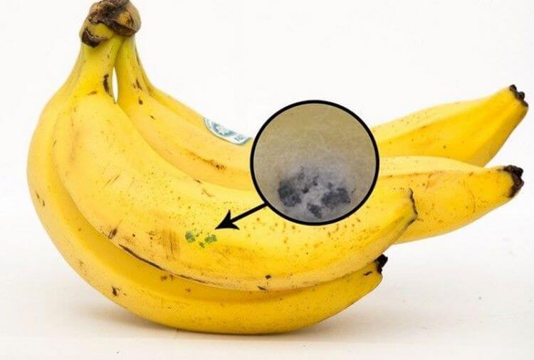 Если увидите такие бананы в магазине - не трогайте и немедленно уходите!