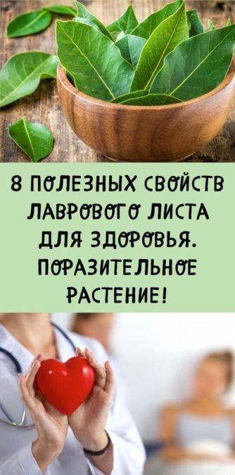 8 полезных свойств лаврового листа для здоровья. Поразительное растение!