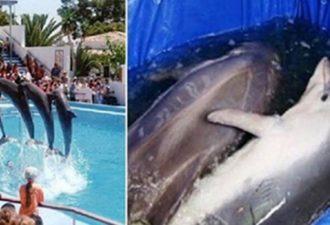 Вот что на самом деле твориться за кулисами шоу с дельфинами. Кошмар…