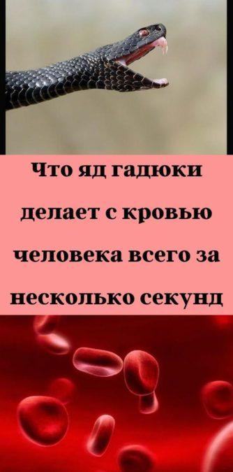 Что яд гадюки делает с кровью человека всего за несколько секунд