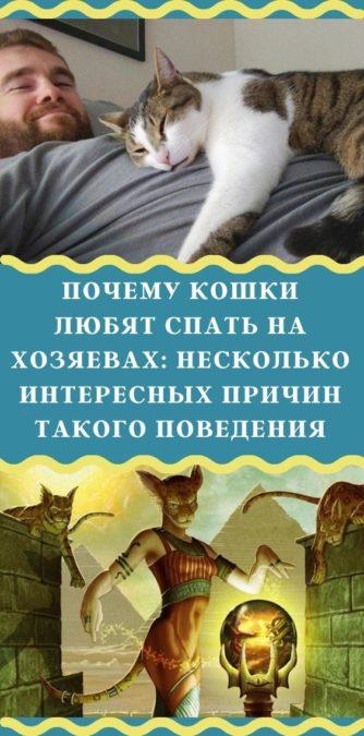 Почему кошки любят спать на хозяевах: несколько интересных причин такого поведения
