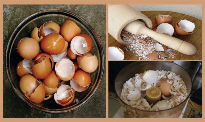 Прочитайте эту статью и перестаньте выбрасывать яичную скорлупу