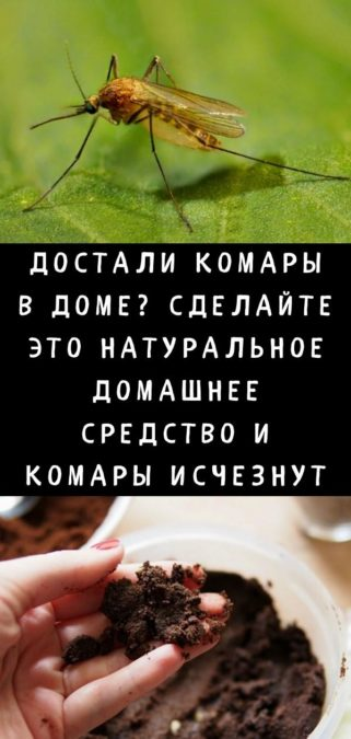 Достали комары в доме? Сделайте это натуральное домашнее средство и комары исчезнут