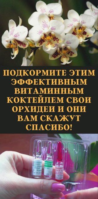Подкормите этим эффективным витаминным коктейлем свои орхидеи и они вам скажут спасибо!