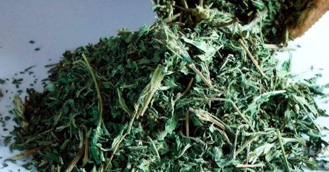 Растение «вечной молодости», которое снизит уровень сахара, очистит почки, омолаживает кожу, устраняет выпадение волос