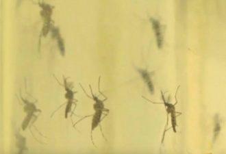 Используйте этот спрей в Вашем доме, через 2 часа Вы попрощаетесь с комарами, мухами и тараканами