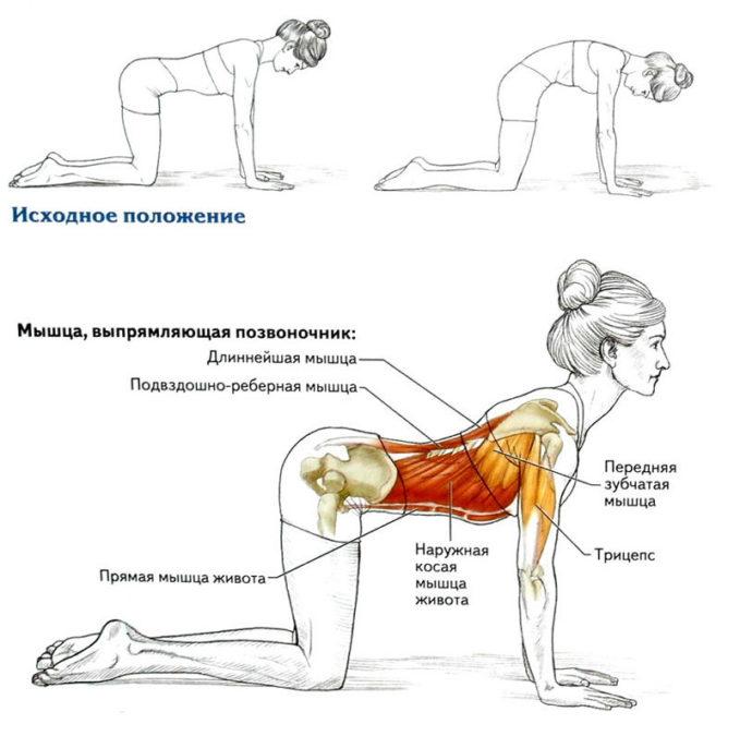 8 простых упражнений для укрепления и омоложения спины
