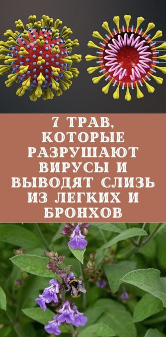 7 трав, которые разрушают вирусы и выводят слизь из легких и бронхов