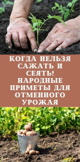 Когда нельзя сажать и сеять! Народные приметы для отменного урожая