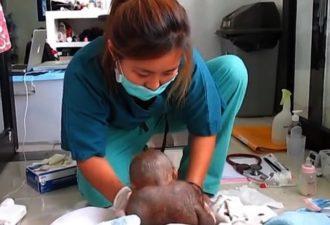 Малыш был заперт в клетке целый год. Посмотрите как медсестра с ним аккуратна, она боится его напугать! (Видео+Фото)