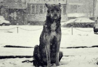 Все началось с того, что на помойке рядом с нашим домом поселился бродячий пес. А дальше, на моих глазах разыгралась настоящая мелодрама