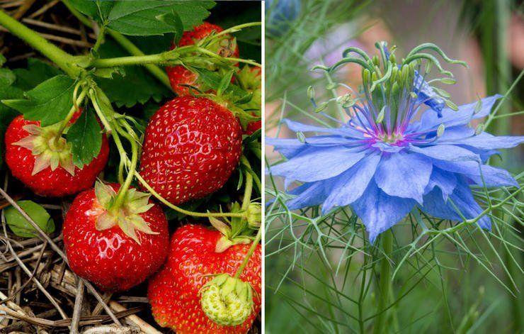 26 растений, которые всегда нужно выращивать на одной грядке