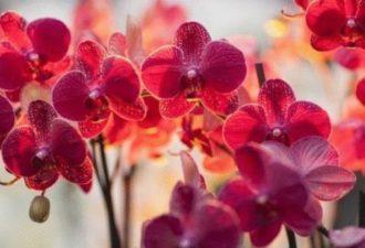 """""""Моя любимая орхидея цветет как сумасшедшая"""" вот как приготовить вкусняшку для шикарного цветения орхидей"""