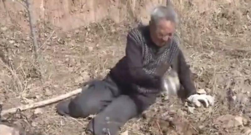 Пожилой безногий ветеран за 19 лет посадил более 17 000 деревьев