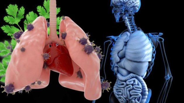 Как без помощи таблеток избавиться от мокроты в лёгких и затруднённого дыхания - 10 средств