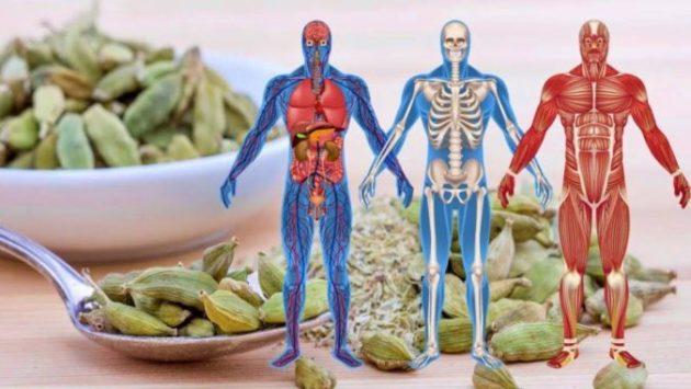 Профилактика заболеваний ЖКТ, сердечно-сосудистой системы, астмы, воспалений - всё это КАРДАМОН