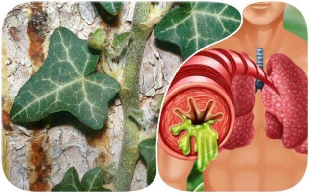 Как вывести мокроту и забыть про кашель: 5 натуральных отхаркивающих средства