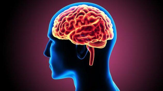 5 проверенных советов для тех, кто хочет улучшить кровообращение головного мозга