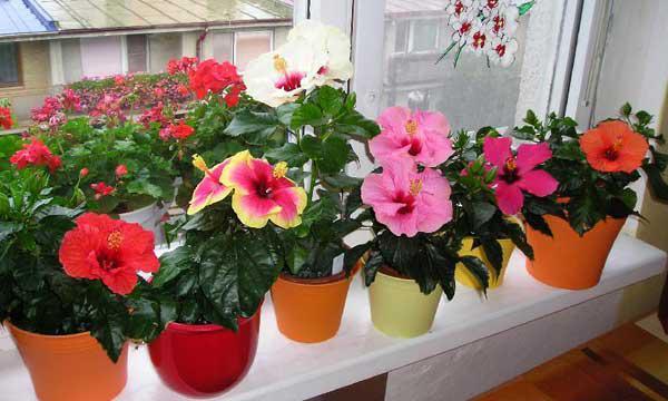 Чтобы не ходить по врачам заведите эти 5 комнатных растений - они лечат людей веками!