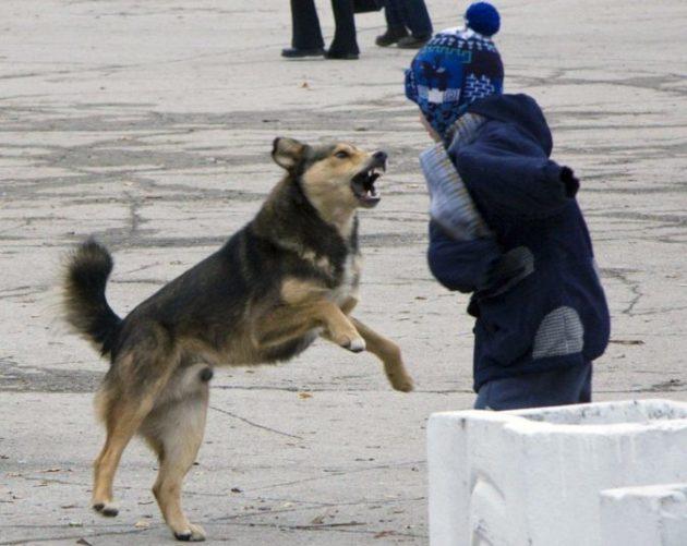 Голландия — единственная в мире страна, в которой больше нет бродячих собак. Вот как им это удалось